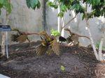 Bambiraptor in Dinosaur Stampede at the San Antonio Botanical Garden