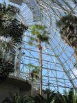 Cycads in Dinosaur Stampede at the San Antonio Botanical Garden