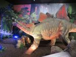 Stegosaurus in Dinosaurs Unearthed at Witte Museum in San Antonio Texas