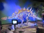 Skeleton and 3D tablet in Dinosaurs Unearthed at Witte Museum in San Antonio Texas