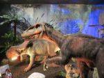 Velociraptor in Dinosaurs Unearthed at Witte Museum in San Antonio Texas