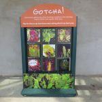 Savage Gardens exhibit quiz blocks carnivorous plants San Antonio Botanical Garden Texas
