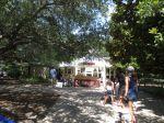Chipotle free tacos Savage Gardens carnivorous plants San Antonio Botanical Garden   San Antonio Charter Moms