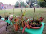San Antonio Botanical Garden BOOtanica! Fall Festival 2013 carnivorous plants | San Antonio Charter Moms