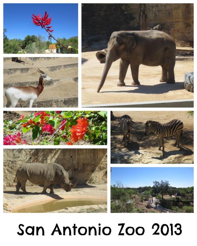 San Antonio Zoo 2013 | San Antonio Charter Moms