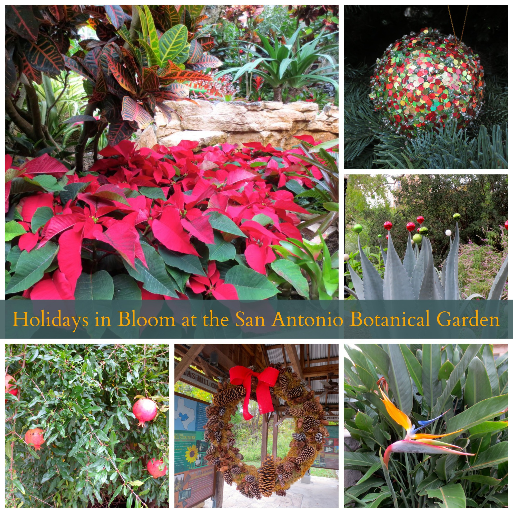 Gallery Holidays In Bloom At The San Antonio Botanical Garden San Antonio Charter Moms