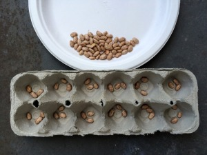 Practice division using beans in an egg carton | San Antonio Charter Moms