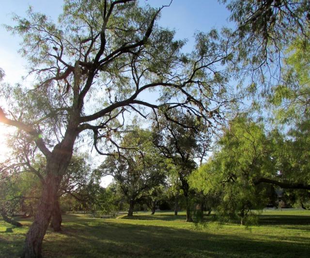 Mahncke Park, San Antonio, Texas | San Antonio Charter Moms